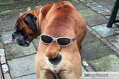 Confused Dog Meme - confused dog