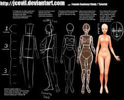 Images Female Anatomy Female Anatomy Study V2 By Jcevil On Deviantart