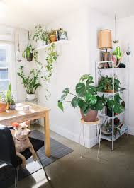 Cascading Indoor Plants by How To Keep Indoor Plants Seattle Met
