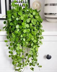 indoor plant 1880 best indoor plants ideas images on pinterest green plants