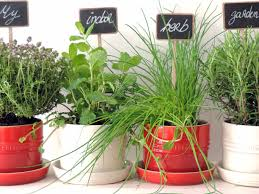 inside herb garden tips on growing an indoor herb garden and preserving them leeks