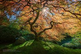 beautiful and trees a gallery on flickr