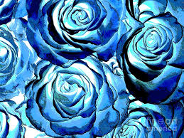 blue roses for sale pop blue roses photograph by toula mavridou messer