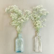 baby s breath flowers flower study baby s breath