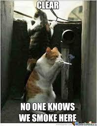 Smoking Memes - smoking cat by enmadakota meme center