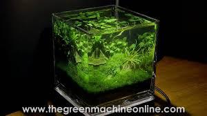 Small Tank Aquascaping Planted Nano Pico Aquarium Aquascape By The Green Machine Youtube