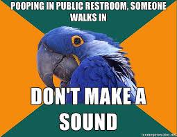 paranoid parrot meme collection 20 1 mesmerizing universe trend