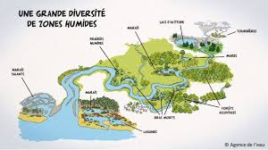 chambre agriculture gard zones humides zones utiles agissons chambre d agriculture du gard