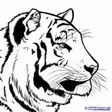 sketch of bengali tiger face drawing of sketch