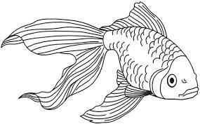 drawings of tropical fish