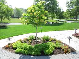 decorative trees for landscaping door decorations
