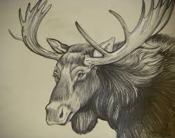 free online moose head drawing 95 for your download coloring pages