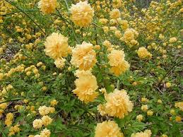 Flower Shrubs For Shaded Areas - 25 beautiful plants for dry shade ideas on pinterest dry shade