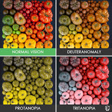 How To Prevent Color Blindness Simple Design Color Blindness Pictures Ishihara Test Coloring Pages