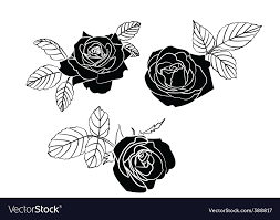 black roses black roses royalty free vector image vectorstock