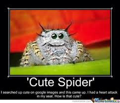Cute Spider Meme - cute spider by amylovespenguins on deviantart