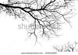 tree branch stock images royalty free images vectors