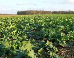 chambre d agriculture ile de chambre agriculture idf 100 images chambres d agriculture