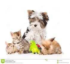 group of domestic animals and birds isolated on white background