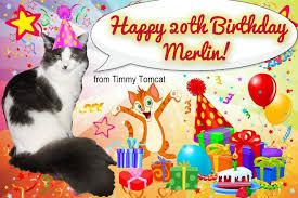 cat wisdom 101 top cat merlin celebrates 20th birthday u2013 cat