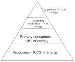 the desert energy pyramid study com