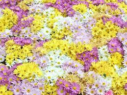வால்பேப்பர்கள் ( flowers wallpapers ) 01 - Page 19 Images?q=tbn:ANd9GcRoh9aAAhnYgBFUogq7LYVe5AfKi6aVy_jVGwk5lNeAQ5sA3aQ0Aw