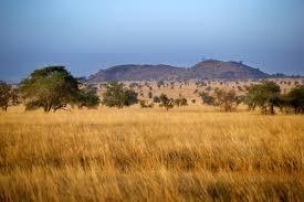 Tropical Savanna Dominant Plants - savanna biome facts