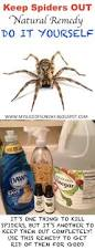 diy spider killer natural remedy to keep spiders out of your