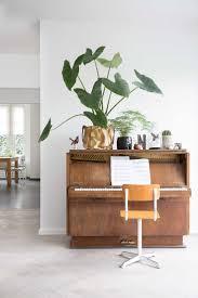 best 25 big house plants ideas on pinterest house plants