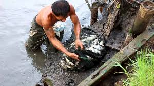 fishpond harvesting it u0027s more fun in the philippines youtube