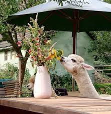 Kleine K Hen Daniels Kleine Farm Home Facebook