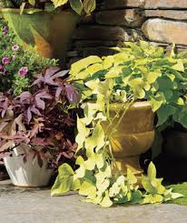10 goofproof outdoor plants real simple