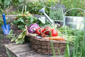 tips for growing a vegetable garden for beginners experts and