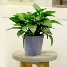 Cheap Small Flower Pots - cheap geometric concrete decorative flower vase cement bulk flower