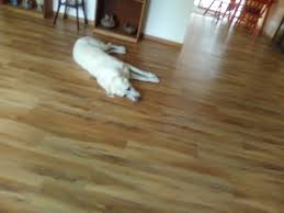 Life Of Laminate Flooring Jetta U0027s Journey Life And Times Of A Service Dog