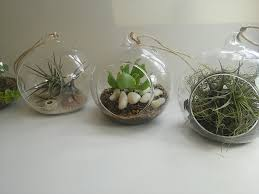 hanging glass balls u2022 hanging planters u2022 terrariums cape town