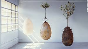 cremation tree biodegradable burial pod turns your into a tree cnn