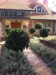 an immaculate front garden with spiral stemmed standard bay trees
