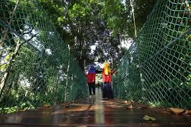 kl tower kl forest eco park
