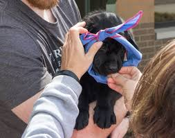 Leader Dogs For The Blind Rochester Michigan Area College Creates Puppy Program For Students To Raise And Train