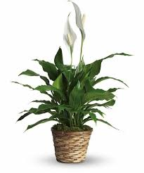what are the best indoor house plants that require minimal