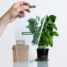 self watering herbs student project on packaging of the world