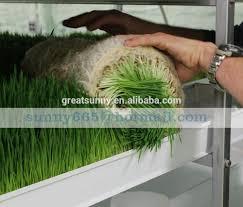 chambre de culture hydroponique la culture hydroponique fourrage pour les animaux machine fourrage