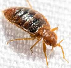 How To Check For Bed Bugs At Home Warning Signs Of Bed Bugs Bed Bug Prevention Tips
