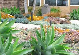 a low maintenance succulent border