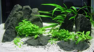 aquascaping in low tech page 6 aquascaping aquatic plant central