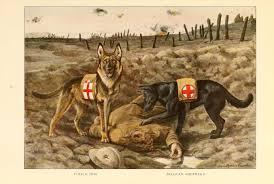 belgian sheepdog dog file police dog belgian shepherd jpg wikimedia commons