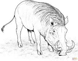 warthog coloring pages free coloring pages