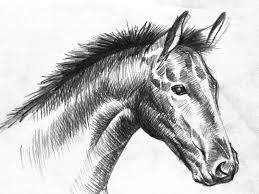 animals wallpapers black and white horse drawings chainimage