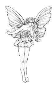 detailed fairy sketches images